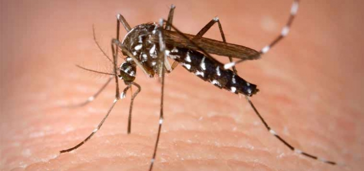 Climate Change And Malaria – A Public Health Perspective